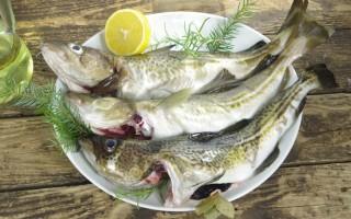 Польза и вред трески как основного источника рыбьего жира