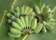 Польза зеленых бананов и состав