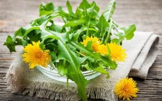 Листья одуванчика – полезные свойства