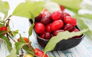 Кизил – польза и вред свежих и сушёных плодов