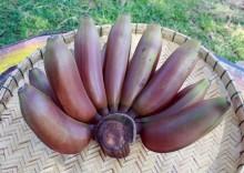 Польза и вред красных бананов