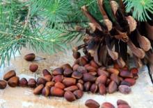Польза и вред кедровых орехов при беременности