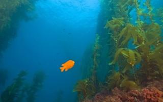 Польза и вред морских водорослей в ассортименте