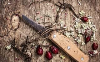 Полезные свойства и противопоказания корней шиповника
