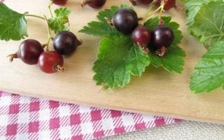 Йошта – полезные свойства и противопоказания гибридных ягод