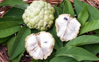 Кремовое или заварное яблоко – полезные свойства