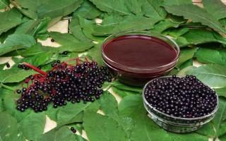 Польза сока из черной бузины