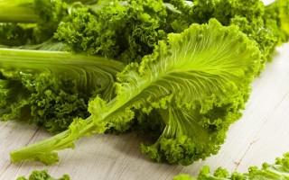 Полезные свойства и противопоказания листовой горчицы
