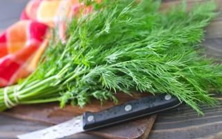 Лечебные свойства укропа и противопоказания: польза и вред зелени и семян