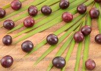 Полезные свойства и противопоказания ягод асаи