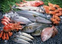 Полезные свойства популярных видов мореходный рыбы