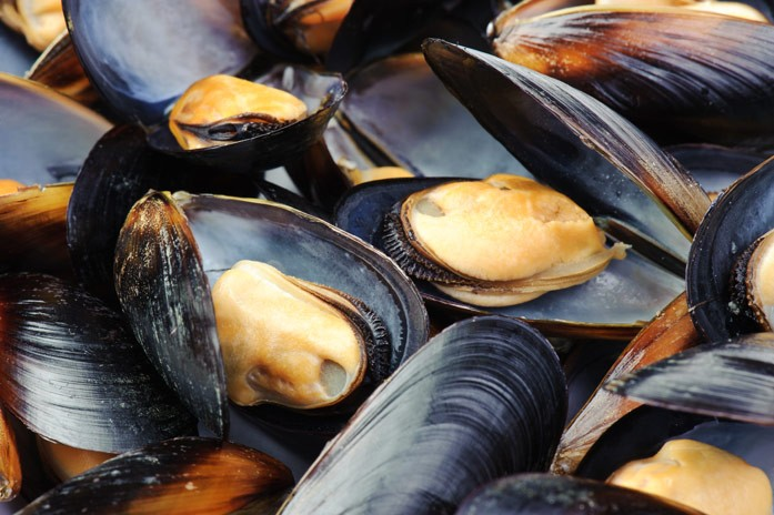 Экстракт раковины моллюска