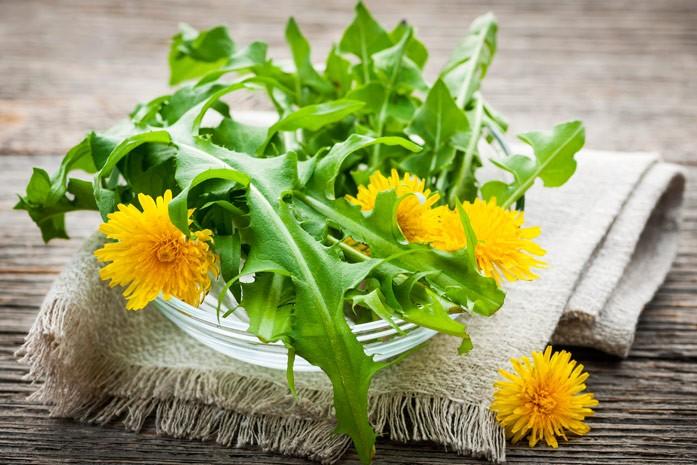 листья и цветки одуванчика