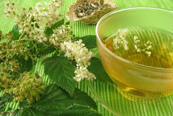 Таволга - полезные свойства и рецепты народной медицины королевы лугов