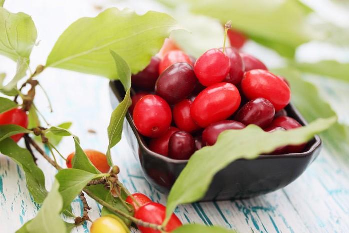 Кизил: полезные свойства плодов, листьев и варенья